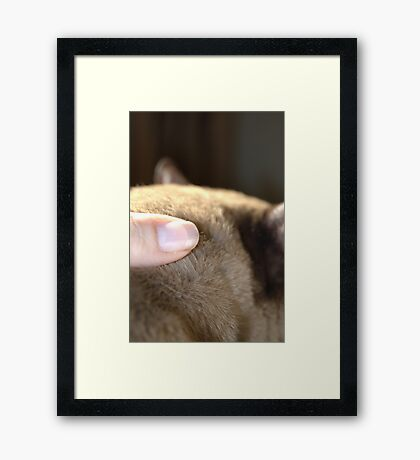 the touch of his fur © 2010 patricia vannucci Framed Print