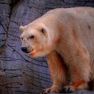 Debbie-The Oldest Polar Bear by Larry Trupp