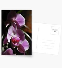 Orchids in sunlight Postcards