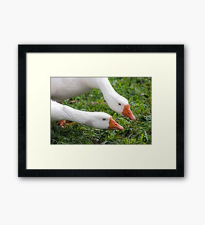 What's with that camera? - geese at Warrina Lakes Framed Print
