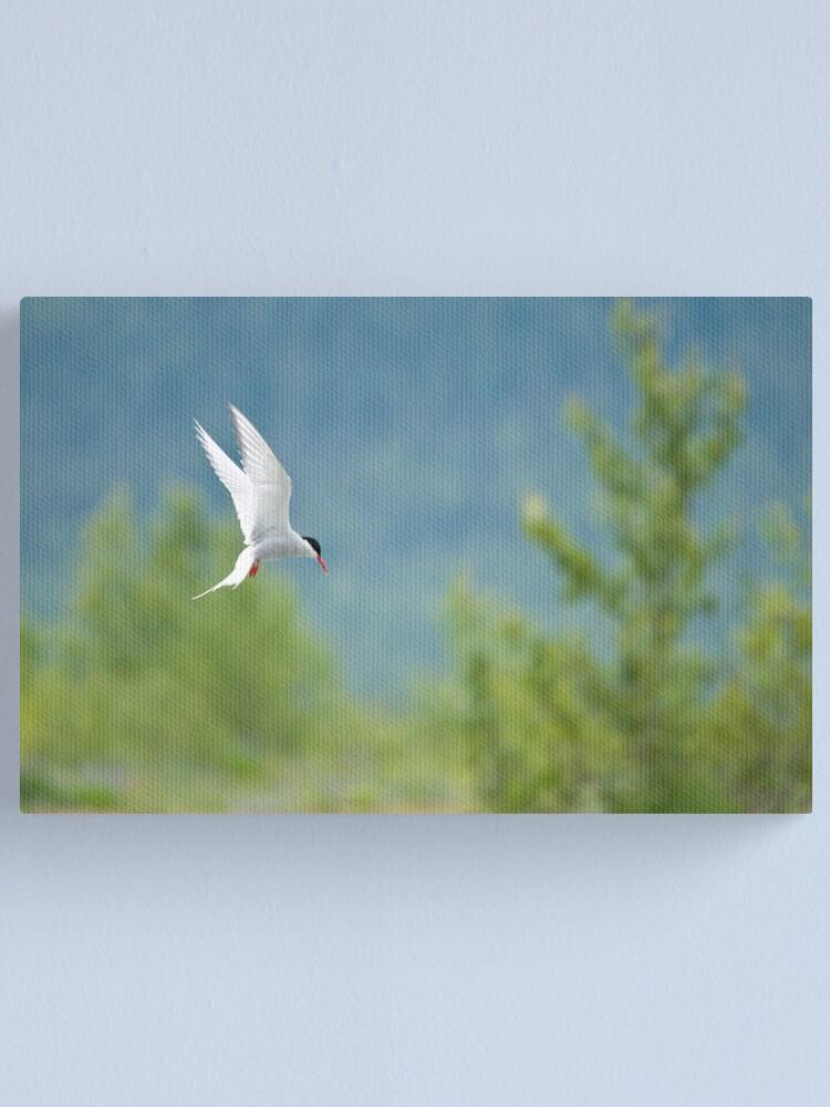Alternate view of Arctic Tern Canvas Print