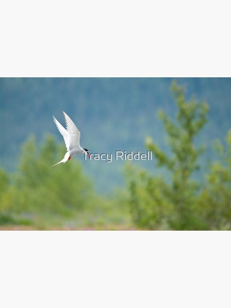 Arctic Tern by taos