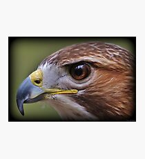 Hawk Eye Photographic Print