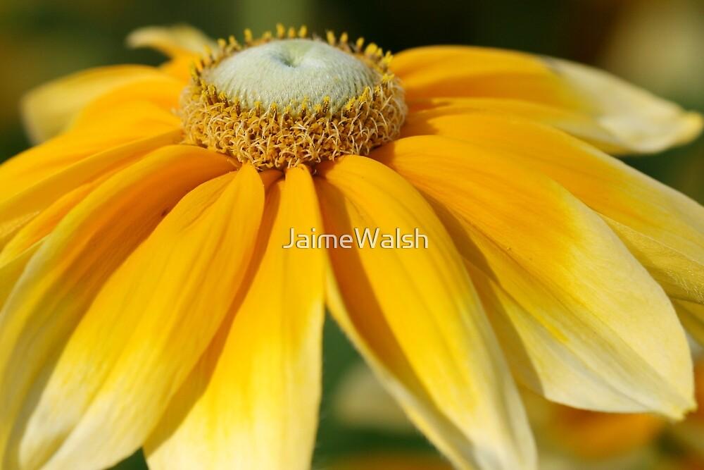 Crown of Gold by JaimeWalsh