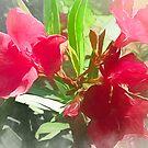 Pink Oleander von Jasmina Seidl