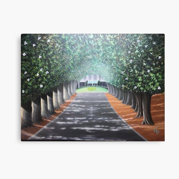 Sunrise Magnolia Lane  Canvas Print