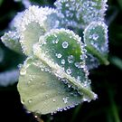 Frosted Leaves by Melissa Park