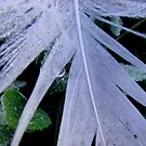 Ice Feather by Melissa Park