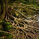 Bare Rooted by Keith Irving
