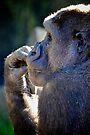 Contemplative Gorilla by Extraordinary Light