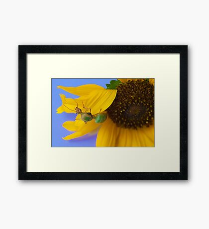 Study of Green Ant #2 Framed Print