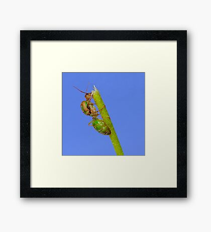 Study of Green Ant #3 Framed Print