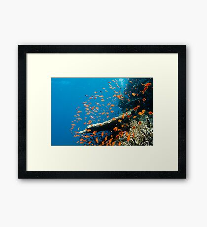 Red Sea Framed Print