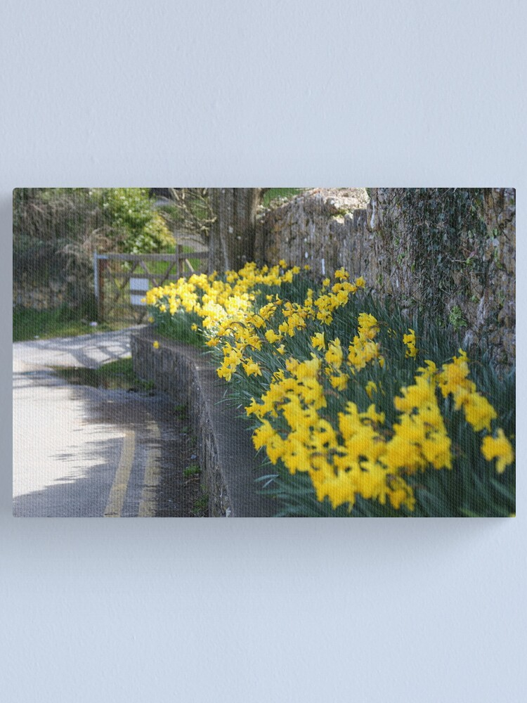 Alternate view of lane of daffodils Canvas Print