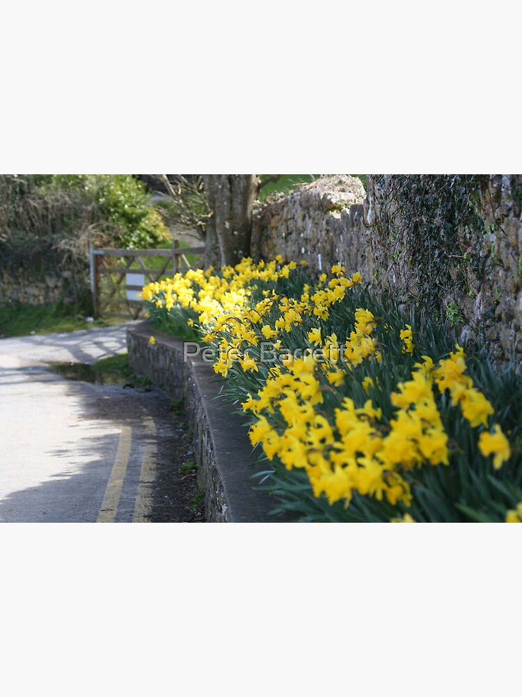 lane of daffodils by hartrockets
