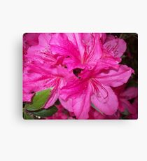 Swirl of Hot Pink Canvas Print