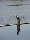 Bird on the Water by ValeriesGallery