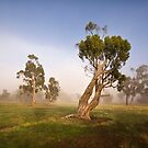 Midlands Eucalypts by Mike Calder
