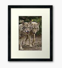 Rescued Timber Wolves 2 Framed Print