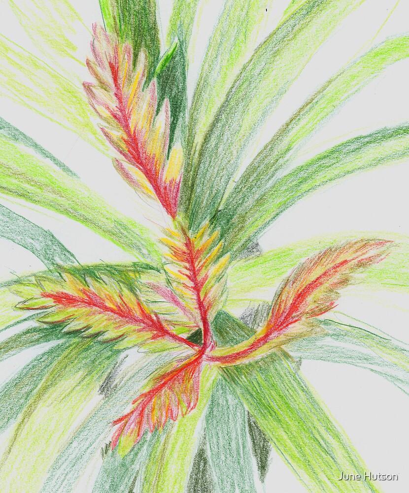Plant Study by June Hutson