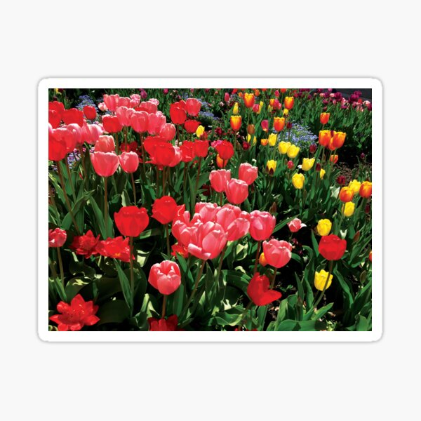 Tulips Take Over the World by Jerald Simon (Music Motivation - musicmotivation.com) Sticker