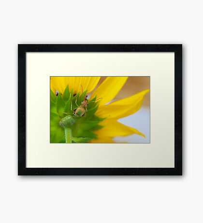 Study of Green Ant #4 Framed Print