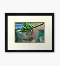 Grape Vine - Rancho Cucamonga Framed Print