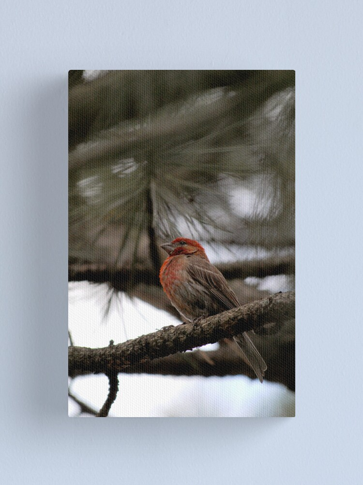 Alternate view of Perched in the Pine Canvas Print