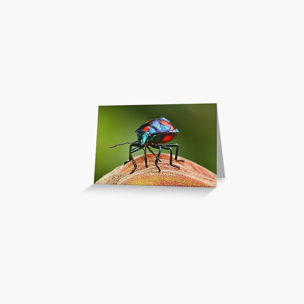 Moon Walker. (Harlequin Bug.) Greeting Card