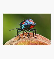 Moon Walker. (Harlequin Bug.) Photographic Print