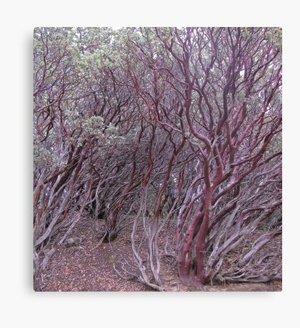 manzanita mosh-up Canvas Print