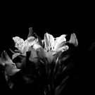 Black and White Bunch of Flowers by Shelly Still