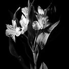 Artistic Black and White Flowers by Shelly Still