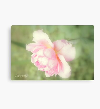 Rose collection 7 Canvas Print