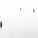 Trees Lost In Water by David Piszczek