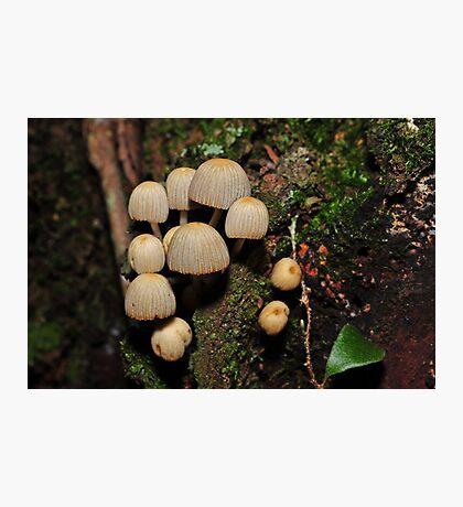 Coprinus disseminatus? Photographic Print