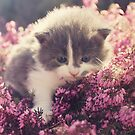 Blue Eyed Kitty by ilva