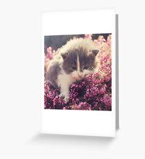 Blue Eyed Kitty Greeting Card
