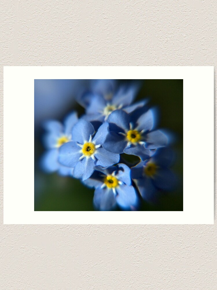 Alternate view of Forget-Me-Not Art Print