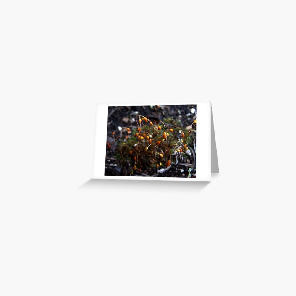 Moss Tendrils Greeting Card