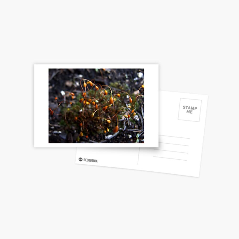 Moss Tendrils Postcard