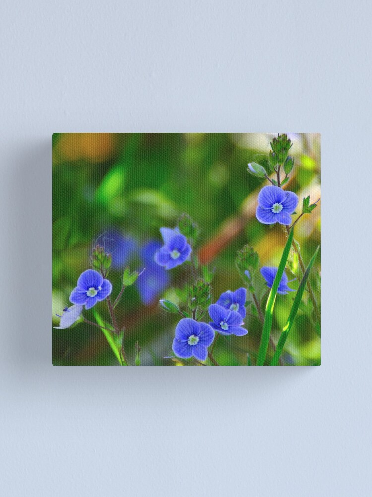 Alternate view of Speedwell Canvas Print