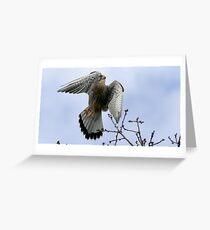 Flight Of The Kestrel Greeting Card
