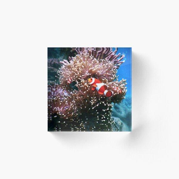 Tropical Undersea Anemone Sea Life Acrylic Block