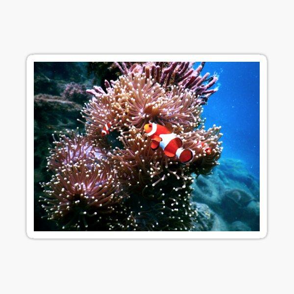 Tropical Undersea Anemone Sea Life Sticker