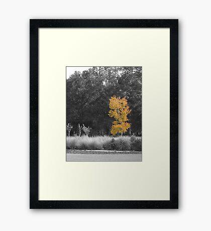 Tree at Sholom Park Framed Print