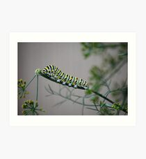 Swallowtail Caterpillar in Kansas Art Print