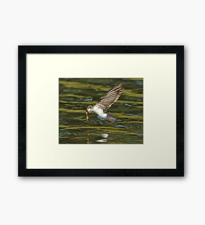 Up the Food Chain You Go Framed Print