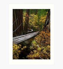 East Fork Illinois River Trail Art Print