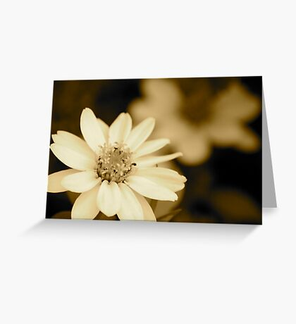 Showy Dwarf Zinnia Greeting Card